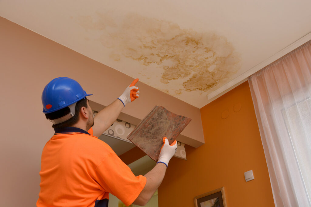 mold in your house